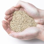 Benefits of Canary Seed