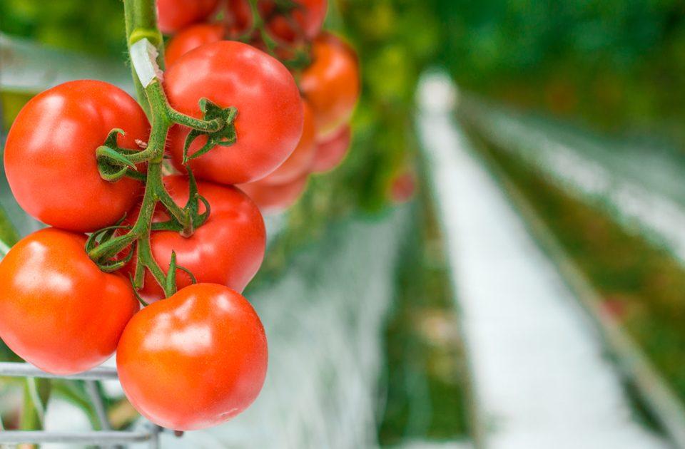 recipes with tomato