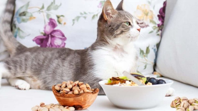Can Cats Eat Pistachios? The truth about this food